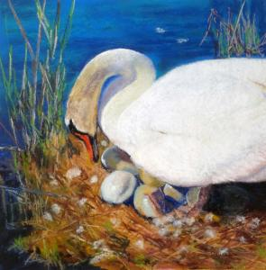Cygnets to Be