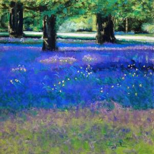 Carpet of Bluebells,(SOLD)
